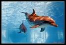 Дельфин_10