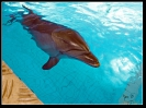 Дельфин_11