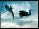 Дельфин_2
