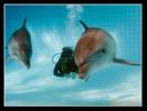Дельфин_3
