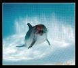 Дельфин_4