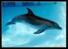 Дельфин_5