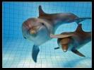 Дельфин_7