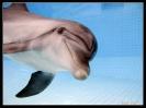 Дельфин_8