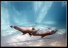 Дельфин_9